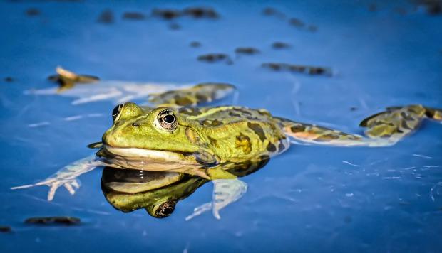 frog-4526640_1920