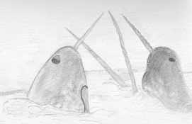 Narwhales
